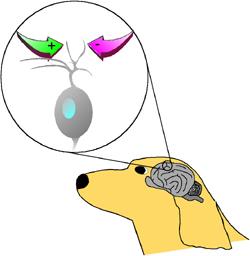 Canine Epilepsy Network